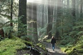 A quiet path, Sol Duc, ONP